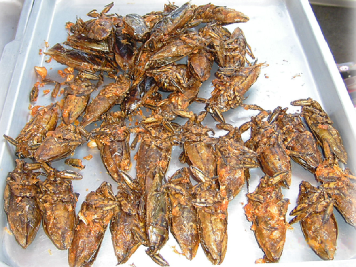 fried_bugs